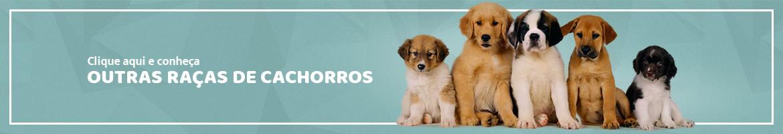 Conheça outras raças de cachorros
