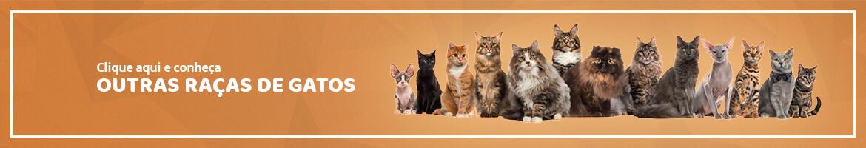 Conheça outras raças de gatos