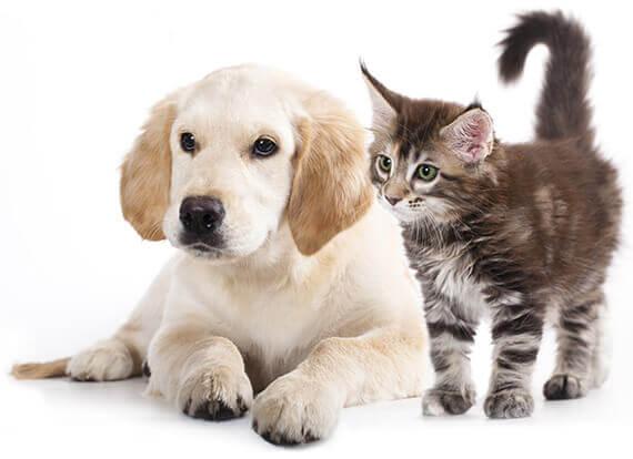 Classificado de animais online - anunciar Pet grátis