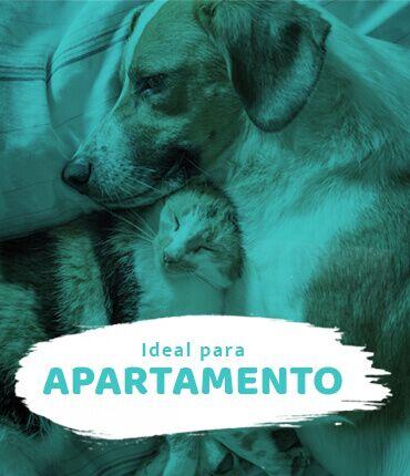 Conheça os gatos e cachorros ideais para apartamento
