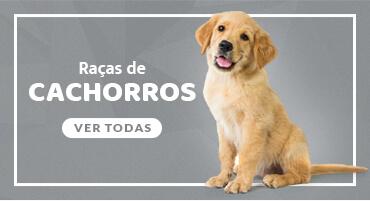 Conheça todas as raças de cachorro no mundo