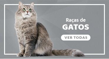 Conheça todas as raças de gatos no mundo