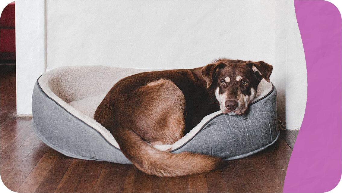 imagem de cachorro descansando. Como cuidar de um cachorro em apartamento e em casa.