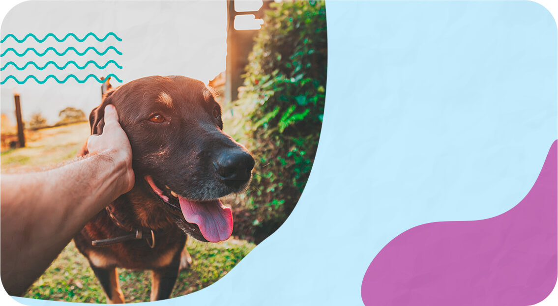 Ilustração para cuidados com cachorros - cachorros cuidados básicos.