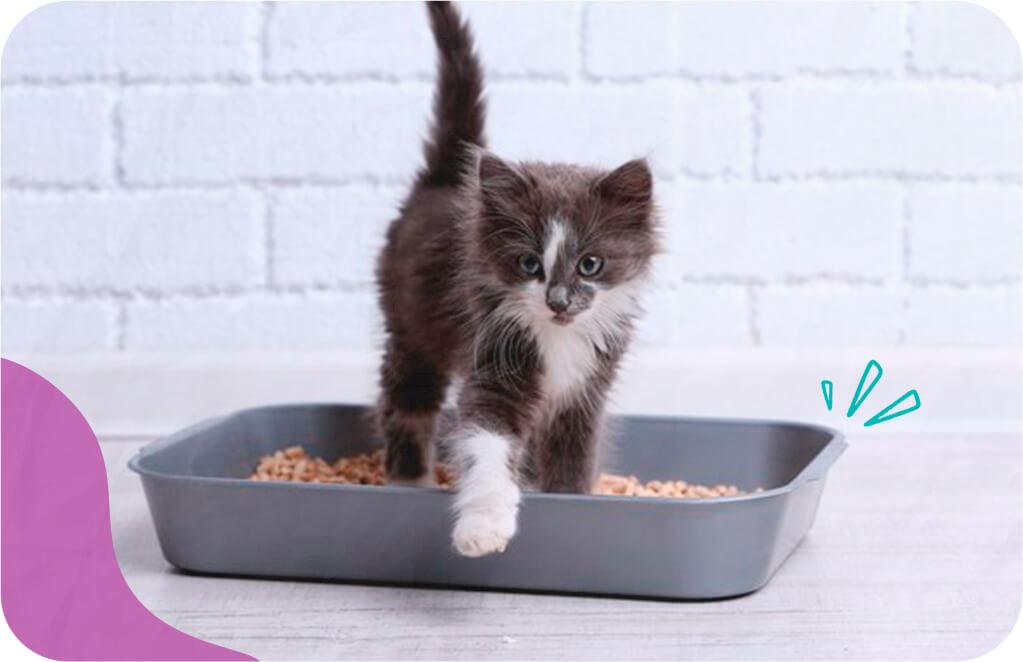Imagem de filhote de gato brincando - como cuidar de gato recém nascido.