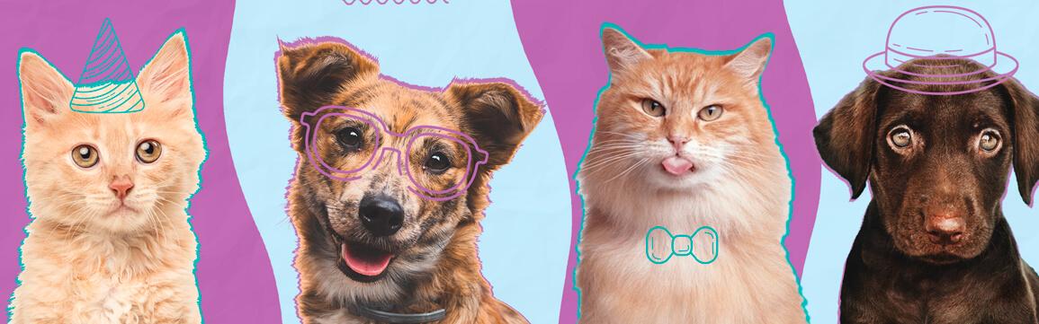 imagem sobre como ajudar organizações de animais